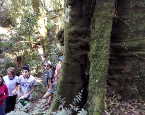 Floresta Preservada